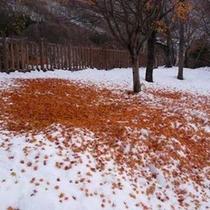 *雪の上に敷き詰められた紅葉
