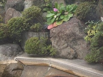 初冬の露天風呂