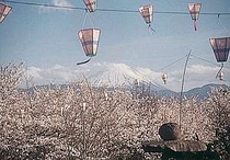 日本庭園の桜と富士山