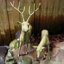 露天風呂前の鹿
