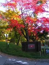 宿の入り口の紅葉