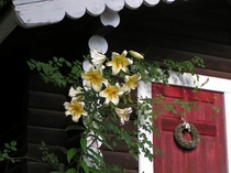 ガーデニング小屋に咲くカサブランカ