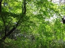 新緑の庭の木々