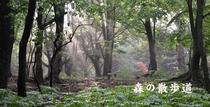 2森の散歩道