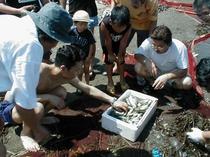 地引網体験 とった魚でバーベキュー!