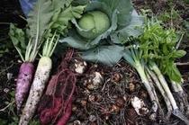 野菜畑の収穫