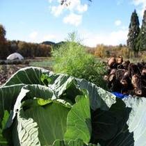 自家菜園の野菜500×500