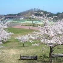 春の陽気が感じられる桜の外観