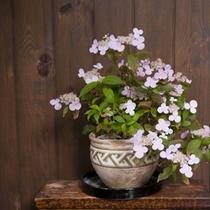 館内、お花イメージ