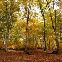 水源の森の紅葉