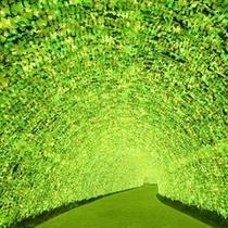 ☆光のトンネルinなばなの里☆