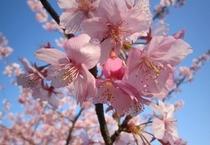 岡山名物・桃の花
