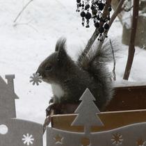 冬の窓辺のリス