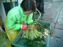 菜っ葉洗い。野沢菜の水洗い