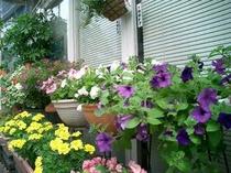 玄関前のお花たち