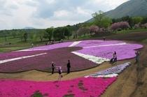 黒姫高原芝桜園