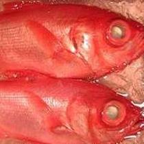 *金目鯛のしゃぶしゃぶ一例/伊豆に来たらやっぱり「金目鯛」!