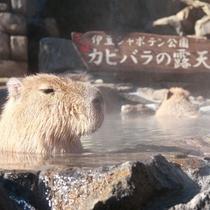 初日は【伊豆シャボテン公園】でカピバラ露天風呂をCheck!(当館より車で12分)
