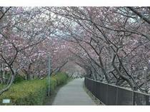 河津桜 峰の桜トンネル