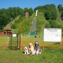 草津国際スキー場天狗山ドックランB