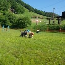草津国際スキー場天狗山ドックラン