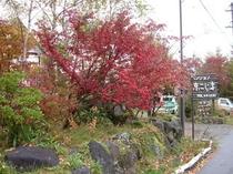 看板、紅葉の始まり
