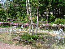 白樺と芝桜