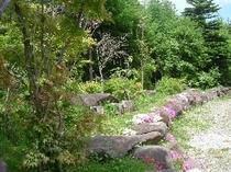 新緑と芝桜