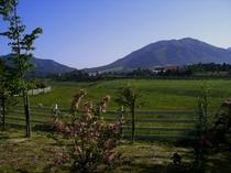 タニウツギと、牧場
