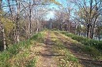 foot path2