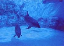 名古屋市水族館
