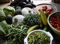 趣味の野菜
