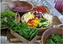 有機野菜のサラダバー