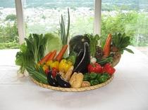 農園野菜イメージ