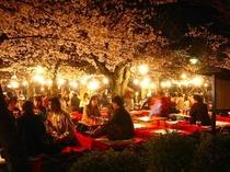 円山公園-夜桜宴会