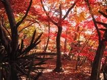 永観堂-紅葉
