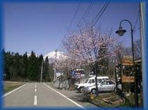 春の妙高山