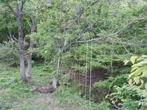 森のブランコ