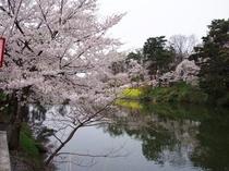日本3大夜桜高田城桜