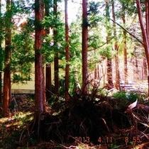 2013.04.08爆弾低気圧で倒れた杉の大木が屋根にドカン!