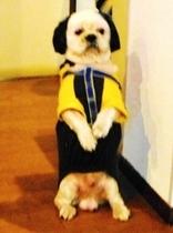 「いらっしゃいませ♪」看板犬が立って、ご挨拶です。モカ8才2