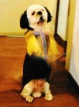 看板犬モカご来館の挨拶:手は上下に尻尾は左右にブンブン動きます♪