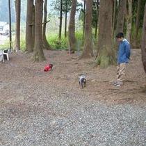 アルミュール専用♪目の前の森の中、ミニドッグランで遊びましょう♪