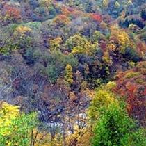 晩秋は紅葉に包まれます。紅葉スポットも多数あります♪