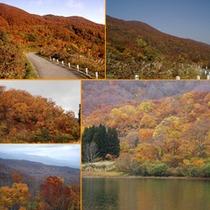 *鍋倉高原の紅葉風景