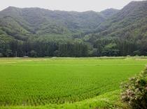 窓からの田園風景
