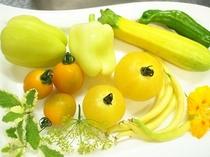 黄色い夏野菜