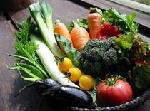 自家菜園の減農薬野菜