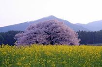 木々が芽吹き春のそよ風と共に笠岳の春