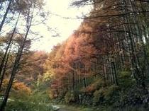 秋山田牧場への道中